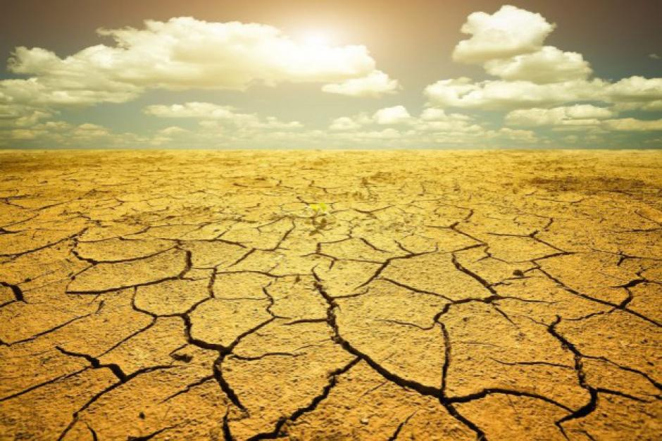 KRIR: W rolnictwie widać pierwsze symptomy suszy, może być gorsza niż rok temu
