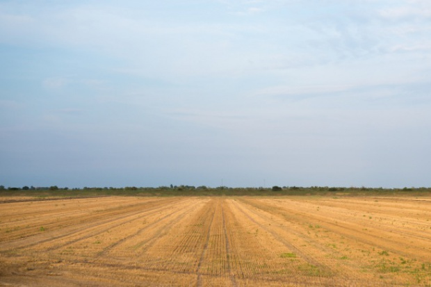Afera w rolnictwie. CBA zatrzymało szantażystów