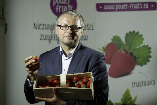 Plantacje truskawek są w słabej kondycji