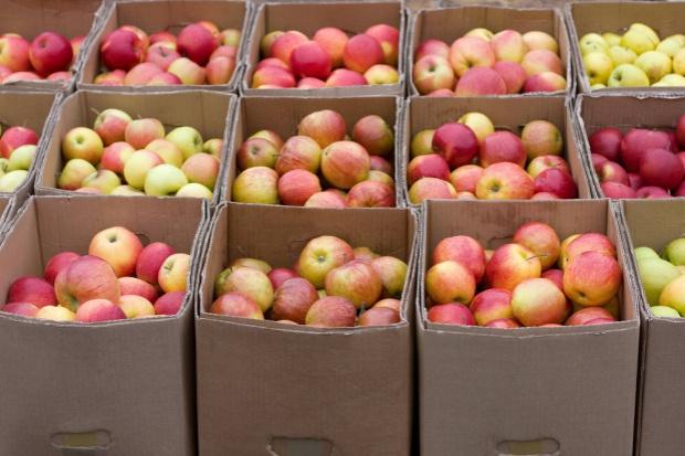 Włochy są liderem w ilości przechowywanych jabłek. Polska uplasowałą się na drugim miejscu