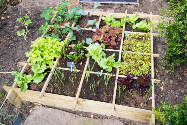 W Moskwie będą uprawiać warzywa w miejskich parkach