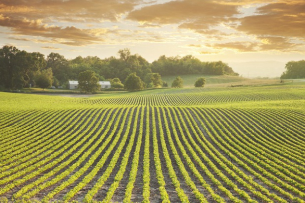 Wiceminister rolnictwa: Ustawa o handlu ziemią spełnia oczekiwania rolników