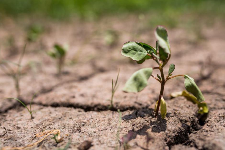 MRiRW będzie mogło dokładniej szacować zagrożenia suszą