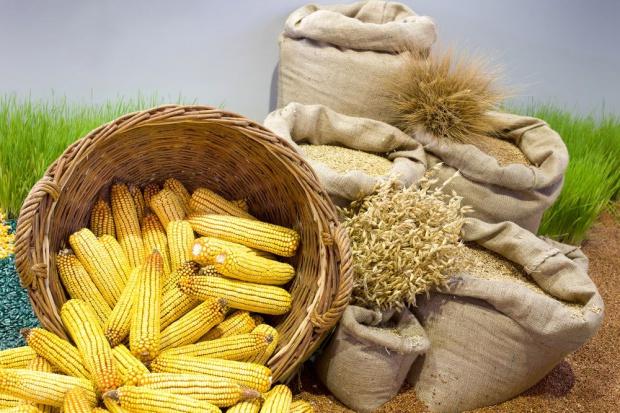 GUS: W kwietniu spadek cen większości produktów rolnych