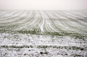 MRiRW: 21,5 tys. gospodarstw poniosło straty z powodu złego przezimowania upraw