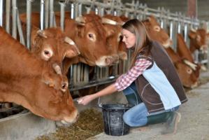 W blisko połowie województw cena mleka spadła poniżej złotówki