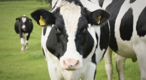 Unia Europejska kupuje mniej produktów mleczarskich z Polski