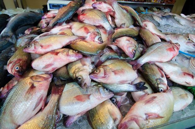 Rośnie import ryb do Polski