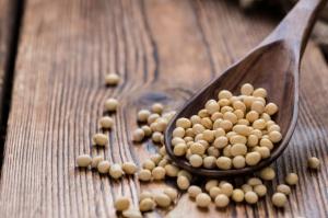 IGC: Nieco większa prognoza produkcji soi
