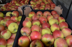 Ceny jabłek na Ukrainie najniższe od sześciu lat