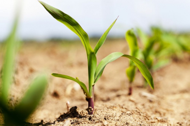 GUS: Chłody niekorzystnie wpłynęły na wzrost warzyw