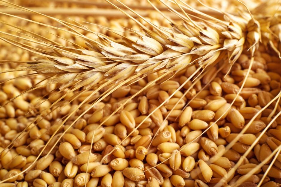Stabilne ceny zbóż. Droższa kukurydza