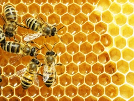 Zmiany klimatyczne optymistyczne dla hodowców pszczół