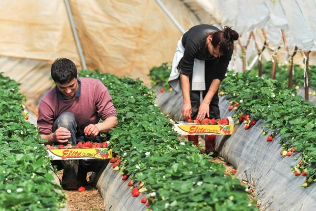 Cudzoziemscy pracownicy sezonowi mają zarabiać tyle samo co Polacy