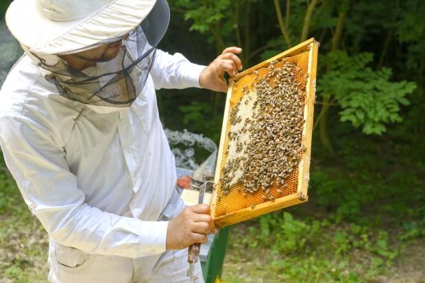 Podkarpackie: W nadleśnictwie Rymanów powstanie las pszczelarski