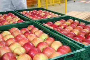 Kazachstan zmniejszył import jabłek