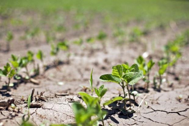Susza w 6 województwach, niedobór wody dotyka głównie zboża jare