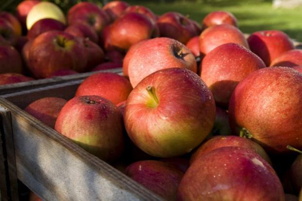 Majowe zapasy jabłek większe niż rok temu
