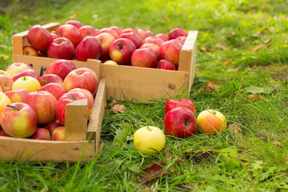 Chińczycy zniosą embargo na import polskich jabłek?