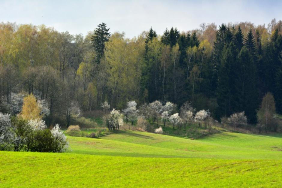 Na Podkarpaciu inwentaryzują zasoby przyrodnicze lasów