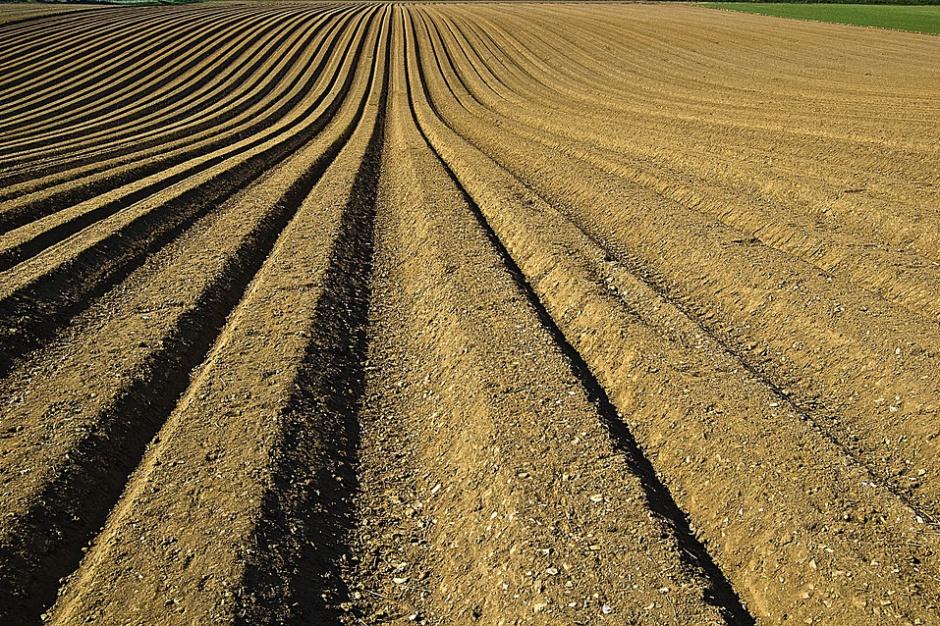 Nowe wymogi czystości gleby. Zapłacą także rolnicy?