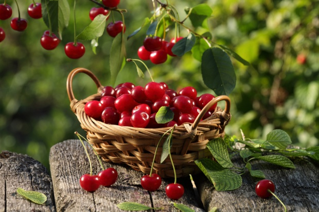 Zbiory wiśni w Polsce wzrosną o około 10 proc. rdr