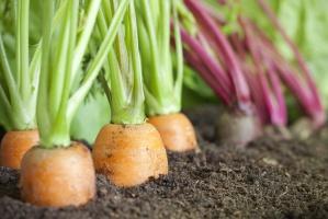 Eko-producenci chcą powołać Polską Izbę Żywności Ekologicznej