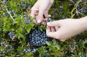 Brakuje Polaków chętnych do podjęcia pracy sezonowej w ogrodnictwie