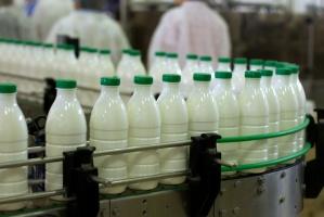 Polskie mleczarnie pracują z pełną mocą