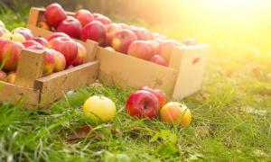 Polscy producenci jabłek podpisują porozumienie z Chinami