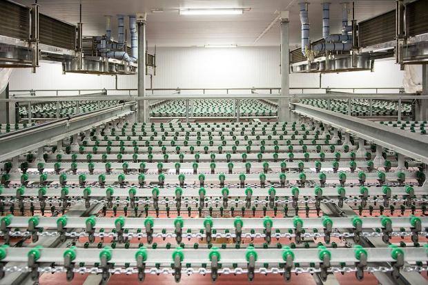 Trwa modernizacja szczecińskiego zakładu Drobimexu