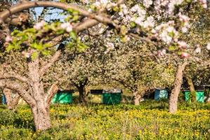 Badanie: Współpraca rolników, sadowników i pszczelarzy układa się pozytywnie