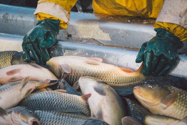 Opłaty za wodę nieznacznie zwiększą koszt produkcji ryb