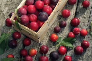 Prognozy TRSK: Lepsze zbiory jabłek, gorsze truskawek, porzeczki, wiśni i śliwek