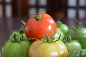 Konkurencyjność podażowa polskiego sektora warzywniczego w Unii Europejskiej