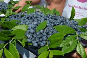 Rusza sezon na owoce jagodowe oraz kampanie promujące ich konsumpcję