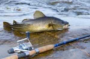 Nowe Prawo wodne: Rybacy nie powinni płacić za wodę?