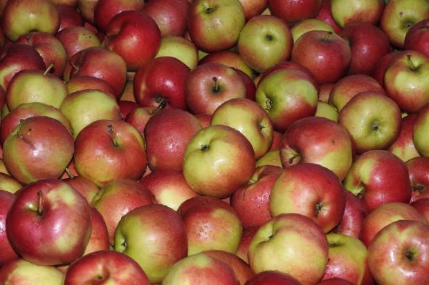 Polskie jabłka podbiją rynek Kanady i USA?