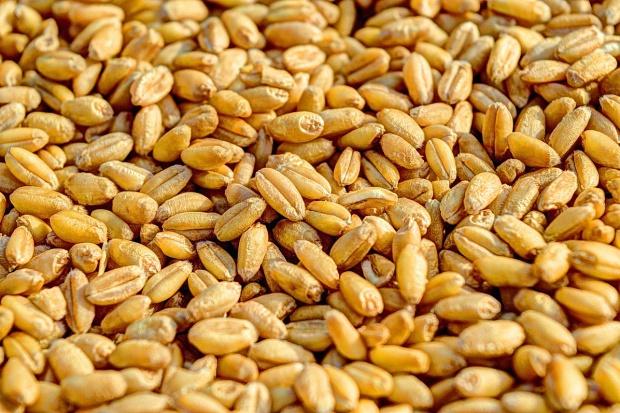 Zbiory zbóż w UE mogą być o 1,8 proc. wyższe niż przed rokiem