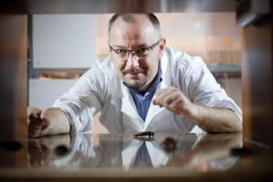 Twórca HiProMine: Postrzegamy owady jako normalne zwierzęta hodowlane
