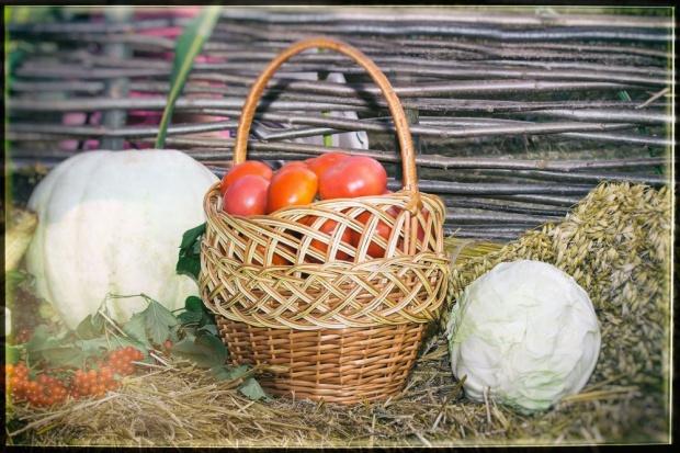 Kampania ICPPC ws. sprzedaży żywności przez rolników