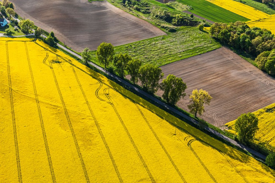 IERiGŻ: W maju pogorszyły się rynkowe uwarunkowania produkcji rolniczej