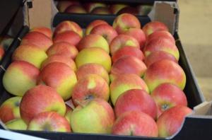 Rynek jabłek na Ukrainie jest w katastrofalnym stanie