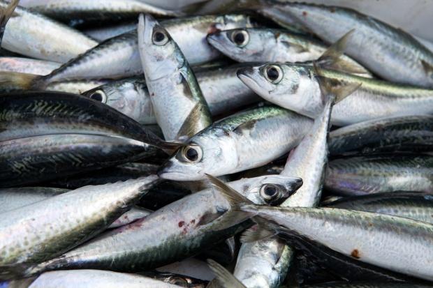 Polskie zakłady zwiększają produkcję ryb