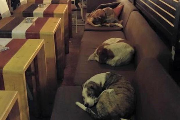 Właściciel greckiej kawiarni zaprasza do lokalu bezpańskie psy