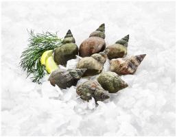 Zdjęcie numer 1 - galeria: Nowe gatunki owoców morza w ofercie MAKRO