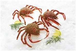Zdjęcie numer 3 - galeria: Nowe gatunki owoców morza w ofercie MAKRO
