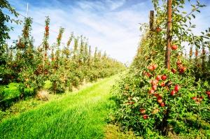 IERiGŻ: Zbiory owoców w tym sezonie będą wyższe niż rok temu