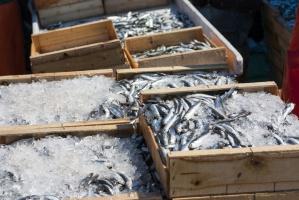 Polska zwiększa eksport ryb i owoców morza
