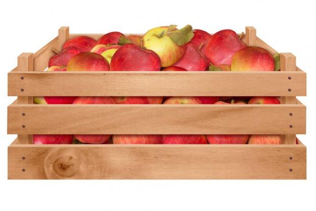 Ceny skupu jabłek deserowych o połowę niższe rdr